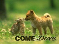 Oggi e domani gli animali protagonisti a Pinerolo