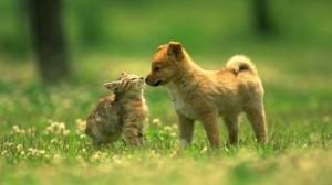 cani-e-gatti-a-primavera