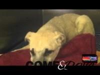 TG WEB | MARTEDì: 11/03/2014 migliorano le condizioni della cagnolina di Lusernetta