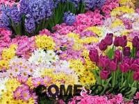 Doppio appuntamento florovivaistico nel Pinerolese