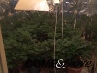 Due arresti per droga a Pinerolo