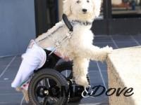 A Cavour i primi giochi Paralympic Dogs