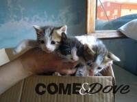 Troppi gatti abbandonati, si cercano nuovi volontari per accudirli