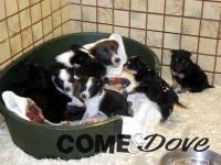 Salvati dai volontari del canile di Bibiana una cagnolina con i suoi 6 cuccioli