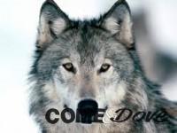 A Fenestrelle si è parlato dei lupi oggi sono 27 in Piemonte