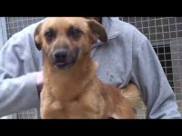 VIDEO| Le video adozioni del Canile di Bibiana #1