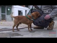 VIDEO | Le video adozioni del Canile di Bibiana #2