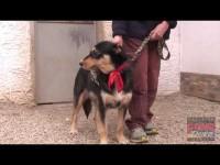 VIDEO | Le video adozioni del Canile di Bibiana #3
