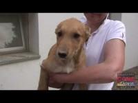 VIDEO | Le video adozioni del Canile di Bibiana #4
