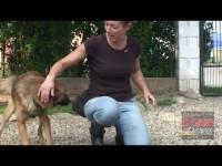 VIDEO | Le video adozioni del Canile di Bibiana #6
