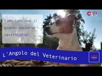 VIDEO | L'angolo del Veterinario #1