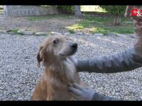 VIDEO | Le video adozioni del Canile di Bibiana #7