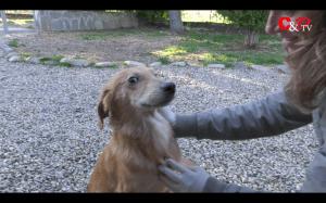 video_adozioni_skar