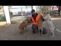 VIDEO | Le video adozioni del Canile di Bibiana #8
