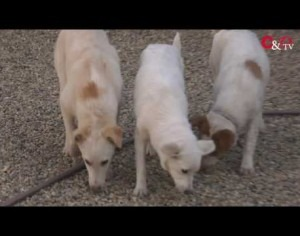 VIDEO | Le video adozioni del Canile di Bibiana #9