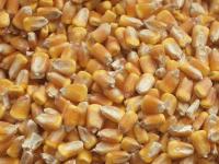 Sicurezza negli impianti di essiccazione dei cereali, se ne parla a Vigone