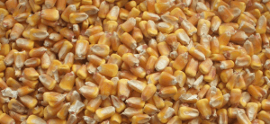 Essiccatoi-mais-cereali-975x450