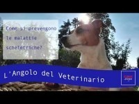 VIDEO | L'angolo del Veterinario #4