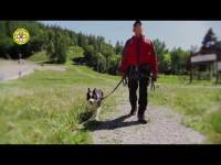 VIDEO | A 12 cani il brevetto per la ricerca in superficie di persone