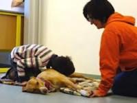 Pet therapy per 8 bambini che presentano disturbi dello spettro autistico
