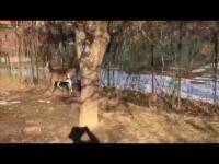 VIDEO | Una protesi per la giovane cerva salvata a Oulx