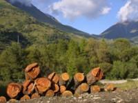 Pinerolese: 14 Imprese locali aderiscono al Pefc per la gestione forestale del legno locale