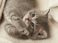 """A Pinerolo iniziative per la """"Settimana del gatto"""""""
