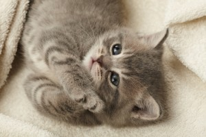 Gatti-dimostrano-amore