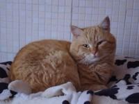 Una nostra news permette di ritrovare un gatto perso 4 anni fa