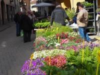 Vigone, fiori e piante protagonisti a Vigoflor