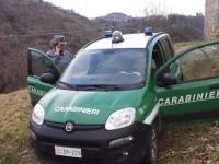 Frossasco, taglia un bosco per piantare gli ulivi: denunciato dai Carabinieri Forestali