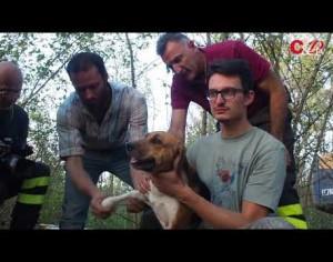 VIDEO | Garzigliana, i Vigili del Fuoco salvano un cane rimasto incastrato 24 ore tra le pietre