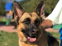 A Pomaretto con la pet therapy il cane aiuta l'anziano ammalato