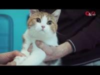 VIDEO | Diamo una zampa a chi ne ha più bisogno