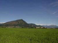 Nel parco del Monte di San Giorgio di Piossasco si censiscono le specie e gli ambienti tipici e unici.