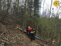 Travolto un boscaiolo dall'albero che stava tagliando