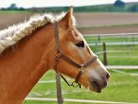 Concorso Ippico Nazionale di Volteggio Equestre ottimi risultati per l'Asd C.s.e di Pinerolo G.i.r.