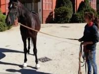 VIDEO | Varenne lascia Vigone