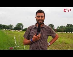 VIDEO | I mungitori indiani non sono lavoratori stagionali