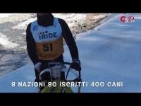 VIDEO | Pragelato, campionato europeo di sleddog