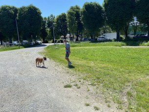 Ecco come la pensa il sindaco sui cani in piazza d'Armi