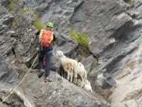 A Salza il Soccorso Alpino e mette in salvo 10 pecore