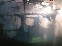 Scalenghe, incendio nella struttura per ricoverare i cani