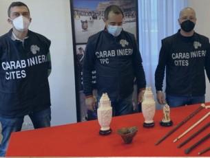 I carabinieri sequestrano oggetti in avorio, corno di rinoceronte e tartaruga