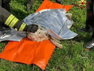 A Garzigliana i vigili del fuoco salvano un cane caduto in acqua