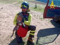 Fenestrelle: salvato dai vigili del fuoco un cane finito nel burrone