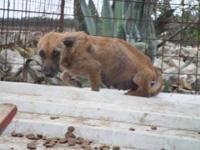 Il canile di Pinerolo cerca nuovi volontari