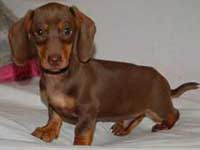 Appello dello Zooprofilattico: a Natale non regalate cuccioli dell'Est Europa